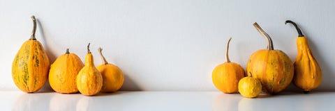 De gelukkige Achtergrond van de Dankzegging Selectie van diverse pompoenen op witte plank tegen witte muur Moderne seizoengebonde royalty-vrije stock fotografie