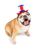 De gelukkige Buldog van de Onafhankelijkheidsdag Royalty-vrije Stock Afbeeldingen