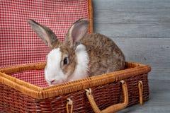 De gelukkige dag van Pasen Het bruine konijn bij het konijn van de mand Leuke Paashaas met geschilderde paaseieren op houten acht stock fotografie