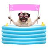 De gelukkige de zomerpug hond met zonnebril en de lege roze banner ondertekenen in opblaasbare poo Stock Fotografie