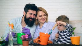 De gelukkige en glimlachende ouders zien hoe hun zoon hen helpt bloemen in gekleurde potten planten Concept de landbouw stock footage