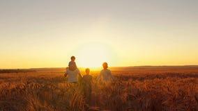 De gelukkige familie loopt langs het tarwegebied bij zonsondergang stock videobeelden