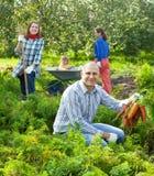 De gelukkige familie plukt wortelen Stock Foto's