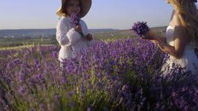 De gelukkige familie verzamelt lavendel voor het herbarium op het gebied en lacht in langzame motie stock video