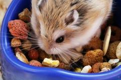 De gelukkige hamster is geniet van zijn voedsel Stock Fotografie