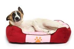 de gelukkige hond rust witte achtergrond Stock Foto