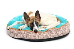 de gelukkige hond rust witte achtergrond Royalty-vrije Stock Fotografie