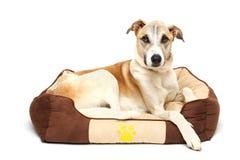 de gelukkige hond rust witte achtergrond Stock Foto's