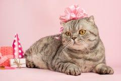 Gelukkige Verjaardag Kat Voorraadbeelden Download 147 Royalty