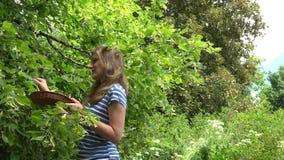 De gelukkige kruidkundigevrouw het plukken kruiden van lindebloemen voor kruidengeneeskunde 4K stock videobeelden