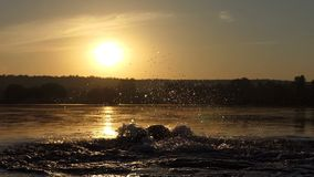 De gelukkige mens stelt en zwemt schoolslag in een meer bij zonsondergang in slo-mo in werking stock videobeelden