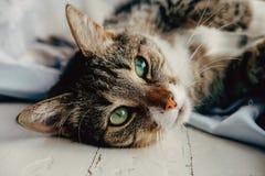 De gelukkige mooie kat ligt dichtbij het venster stock afbeelding