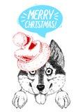 De gelukkige schor hond in Kerstman` s hoed plakt uit zijn tong Royalty-vrije Stock Afbeelding