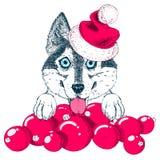 De gelukkige schor hond in Kerstman` s hoed plakt uit zijn tong Stock Foto's