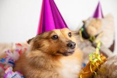 De gelukkige verjaardagshond maakt partij in zijn mand Stock Fotografie