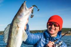 De gelukkige visser houdt Zander-vissen Royalty-vrije Stock Foto's