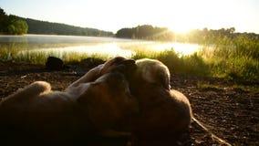 De gelukkige Zusters van Hondenbroers stock videobeelden