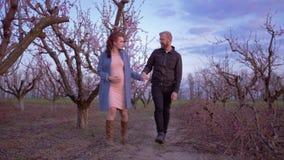 De gelukkige zwangere vrouw gaat met echtgenootvader samen van ongeboren kind in bloeiende boomgaard in het snoeien van seizoen stock footage