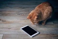 De gemberkat kijkt nieuwsgierig op een tabletcomputer die op een houten vloer ligt Stock Afbeelding