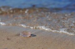 De gemeenschappelijke kwallen van Aureliaaurita, maankwallen die, maangelei, schotelgelei op het strand liggen stock afbeelding