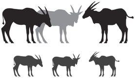 De gemeenschappelijke silhouetten van de elandantilopeantilope Stock Foto's