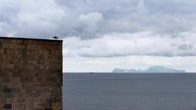 De gemeenschappelijke zeemeeuwen streken op een steenmuur neer van kasteel Napels met Capri-eiland stock video