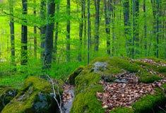 De gemengde bos, bemoste bomen van Greenwood en stenen Foto het afschilderen Stock Foto's