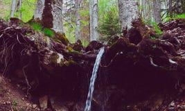 De gemengde stok van de bomenwortels van Greenwood bos, bemoste uit groun Stock Afbeelding