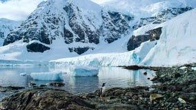 De gentoopinguïn met lange staart is een pinguïnspecies in de soort Pygoscelis, Antarctisch Schiereiland, Antarctica stock afbeeldingen