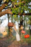 De geoogste pompoenen verfraaien Stock Afbeeldingen