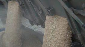 De geoogste tarwe giet van de vrachtwagen uit, omhoog sluit stock footage