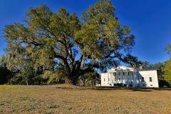 De George Washington Oak At Beautiful Hampton-Aanplanting stock afbeeldingen