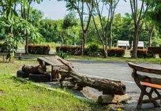 De geplaatste boom zit in een openbaar park stock afbeelding