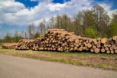 De geplande industriële ontbossing in de lente verse groene pijnboom ligt op de grond langs de weg royalty-vrije stock foto's