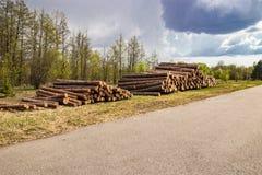 De geplande industri?le ontbossing in de lente verse groene pijnboom ligt op de grond langs de weg stock fotografie