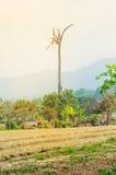 De geploegde bebouwing van de gebiedslandbouwgrond royalty-vrije stock afbeelding