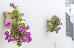 Geraniums royalty-vrije stock afbeeldingen