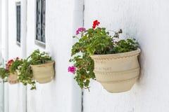 Geraniums stock afbeelding