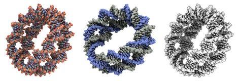 De gerolde molecule van DNA Stock Fotografie