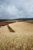 De gerstlandbouwgrond van het hoogland Royalty-vrije Stock Foto's