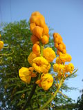 De geschiktheid van bloemen krijgt grote lichte mooi Stock Fotografie