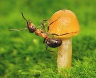 De geschiktheid van mieren Stock Foto