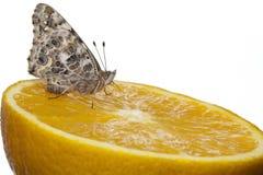De geschilderde vlinder van de Dame Royalty-vrije Stock Afbeeldingen