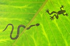 De gesilhouetteerde slang loopt kikker de achterstand in Royalty-vrije Stock Foto's