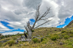 De gestorven oude boom royalty-vrije stock afbeelding