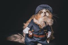 De gestreepte kat en het witte katje kleedden zich als politieman royalty-vrije stock fotografie