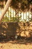 De gestreepte katkat kijkt omhooggaand en legt op de grond in park stock foto