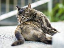 De gestreepte katkat krast een jeuk Royalty-vrije Stock Fotografie