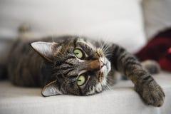 De gestreepte katkat ligt ontspannen op de bank en bekijkt aandachtig royalty-vrije stock foto