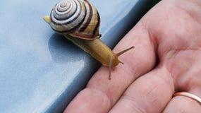 De gestreepte slak kruipt langzaam op een open palm Stock Afbeeldingen